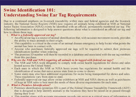 Swine Identification 101: Understanding Swine Ear Tag Requirements