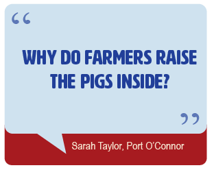 Why do farmers raise the pigs inside?