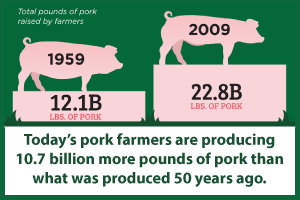 Producing-more-pork