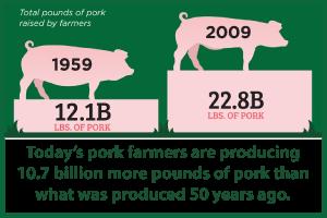 Producing-more-pork