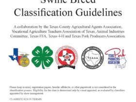 Swine Breed Classification Guidelines
